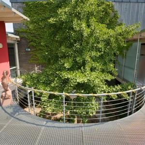 Baum in Schwimmbad